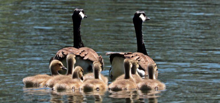 חופשה משפחתית: כך תארגנו את הטיול המושלם