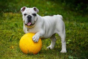 המדריך למאמץ המתחיל ציוד חובה לבעלי כלבים עידן בן אור