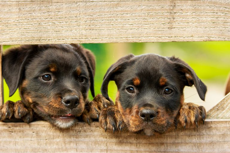 המדריך למאמץ המתחיל: ציוד חובה לבעלי כלבים
